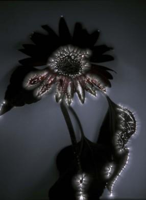 grijze achtergrond, zwarte bloem met witte lichtjes