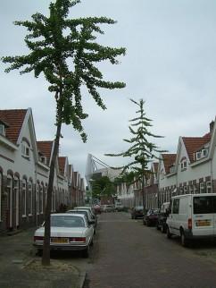 Straat in Philipsdorp, met Philipsstadion op de achtergrond