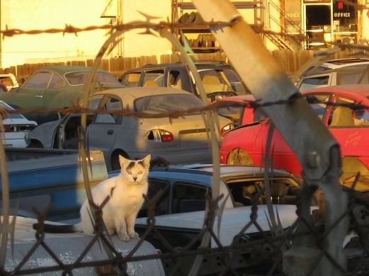 Gebouwen en een kat in geel, rood, wit en zwart