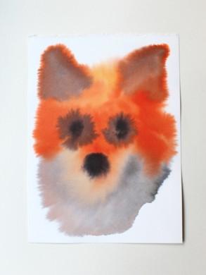 witte achtergrond, kop van vos in roodbruin en wit