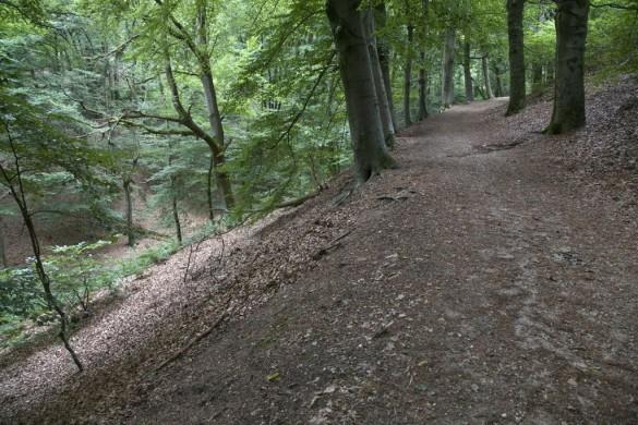 schuine helling linksonder naar rechtsboven, bruin, boomstammen, donkerbuirn, links ernaast groene vegetatie