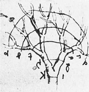 Een schets van Da Vinci waarin hij laat zien dat de takken van bomen altijd volgens een vaste vuistregel groeien: de totale dikte van de takken op een bepaalde hoogte is altijd gelijk aan de dikte van de stam.