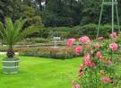 Groen vlak tot halverwege beeldvlak. Groene pot, witte strepen, plant langwerpige groene varenachtige bladeren, rechts rose rozenstruik, groene bomenhaag achtergrond