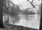 Zwart/wit/grijs/vierkant water, zwarte bomen, grijze lucht